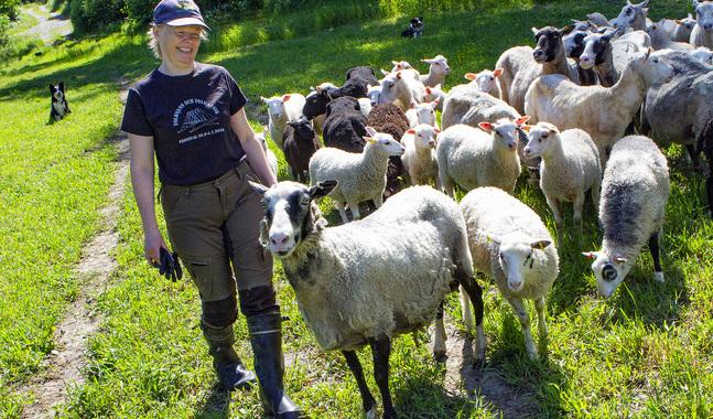 I Elisabet Lundströms flock finns urprungsraserna Finskt får och Kajanalandsfår. De har alla sin personlighet.