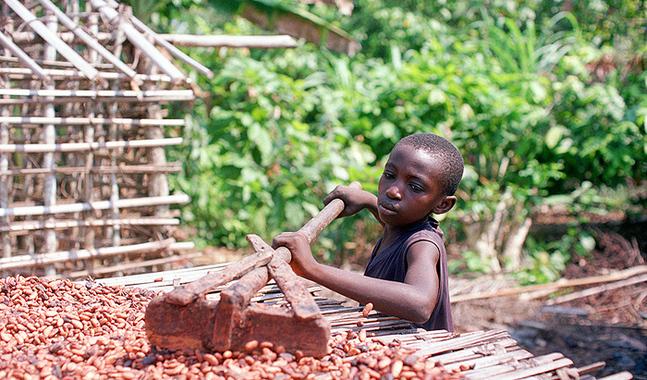 Mer �n 70 procent av v�rldens kakaoproduktion kommer fr�n de v�stafrikanska l�nderna Elfenbenskusten och Ghana.