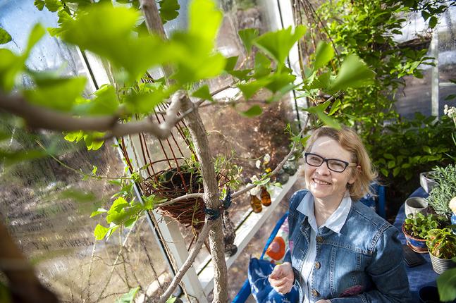 Maria Sjöblom omger sig med växter och blommor. Den här ginkgo biloban är hennes favorit.