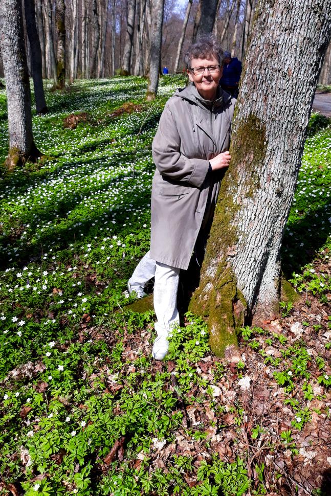 Träd kan vi krama även när vi måste hålla avstånd till människor, säger Majen Norrholm. Foto är taget i Ekenäs, när hennes seminarieklass träffades 50 år efter examen.